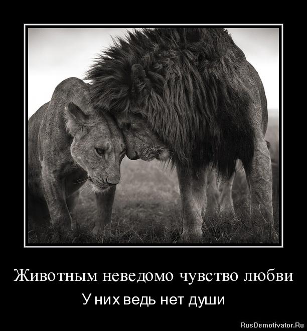Животным неведомо чувство любви - У них ведь нет души