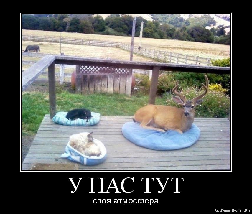 http://rusdemotivator.ru/uploads/07-19-2012/2012071900365869.png