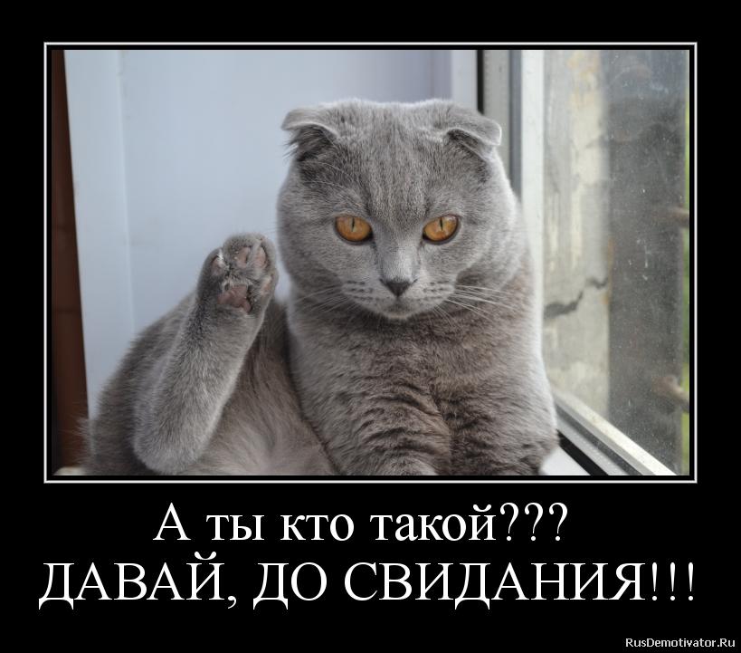 """Паскал об увольнении из Нацполиции: """"Деканоидзе была не в восторге. Но это было исключительно мое решение"""" - Цензор.НЕТ 313"""