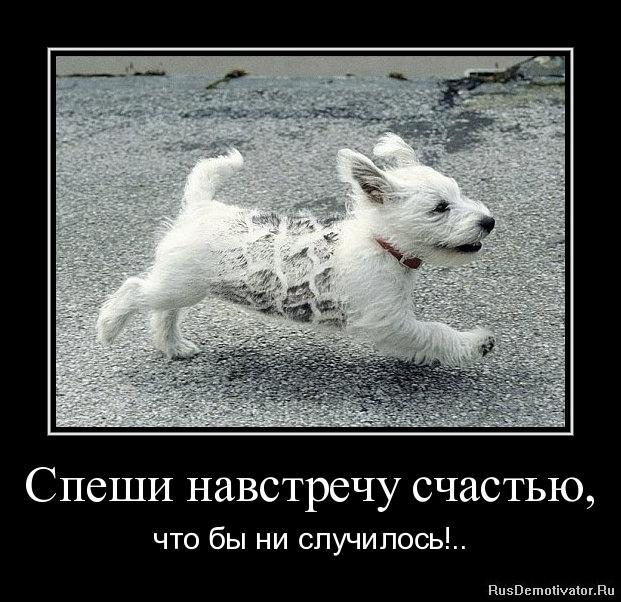 Спеши навстречу счастью, - что бы ни случилось!..