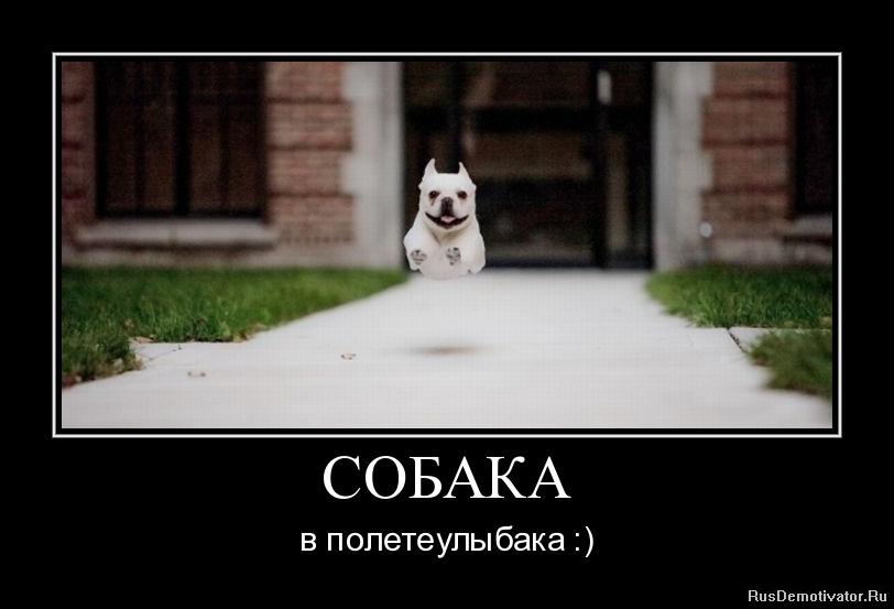 СОБАКА - в полете улыбака :)