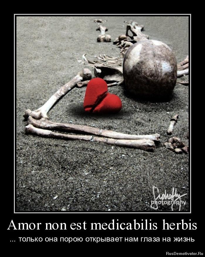 Amor non est medicabilis herbis - ... только она порою открывает нам глаза на жизнь