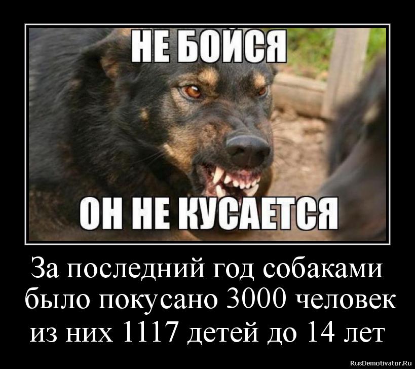 За последний год собаками  было покусано 3000 человек из них 1117 детей до 14 лет