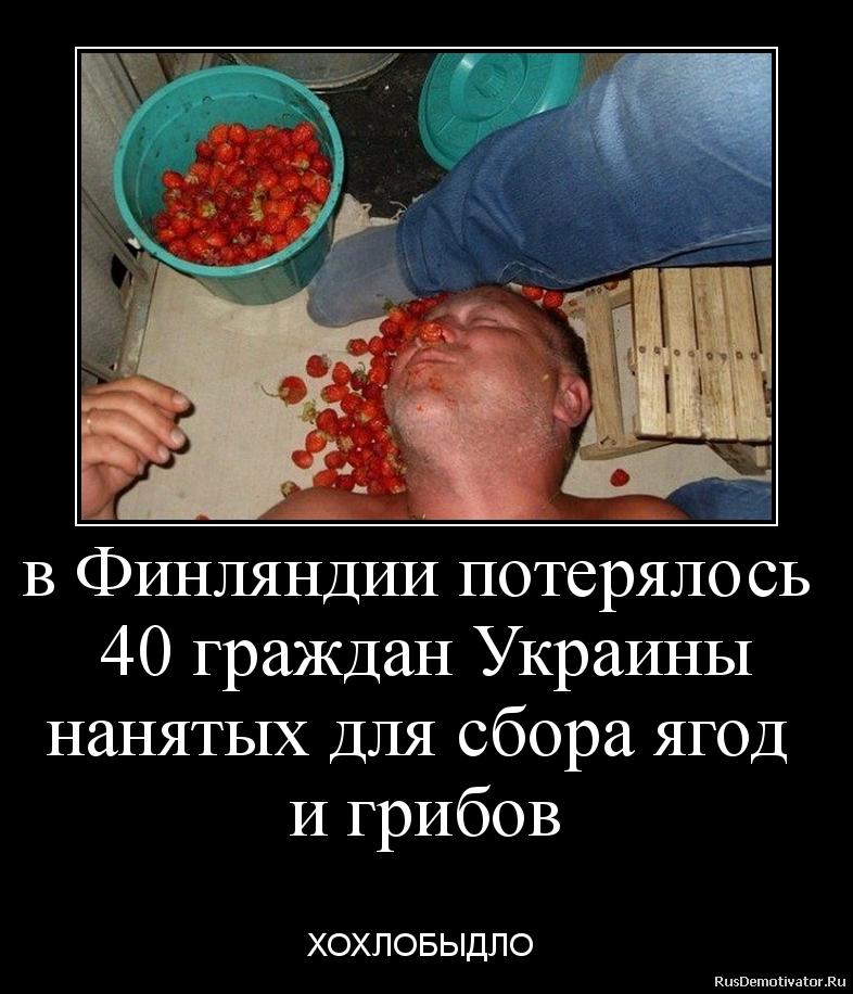 в Финляндии потерялось  40 граждан Украины нанятых для сбора ягод  и грибов  - ХОХЛОБЫДЛО