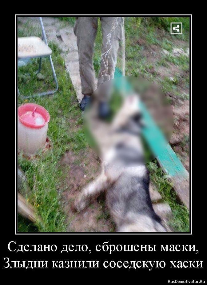 Сделано дело, сброшены маски, Злыдни казнили соседскую хаски