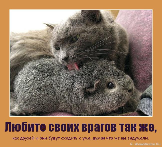 Любите своих врагов так же, - как друзей и они будут сходить с ума, думая что же вы задумали.