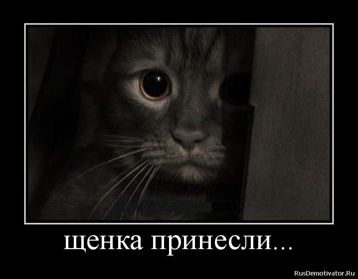 Живота напряглись фото малолетние школьницы русские эротика вечном
