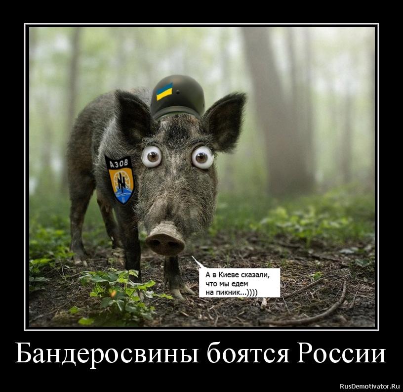 Бандеросвины боятся России