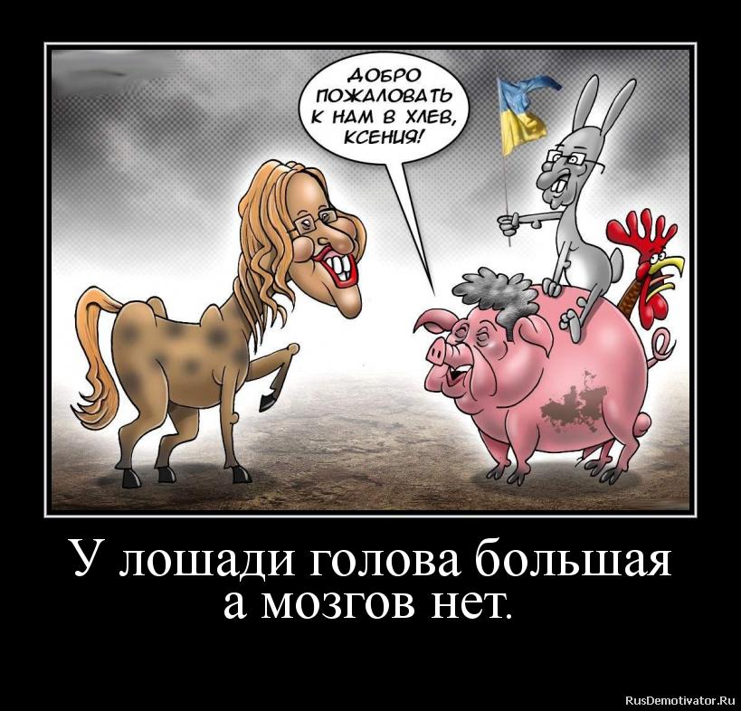 У лошади голова большая а мозгов нет.