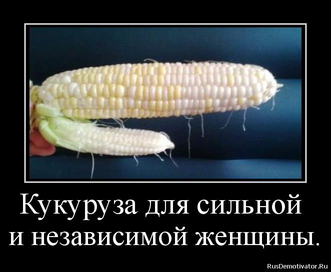Кукуруза для сильной  и независимой женщины.