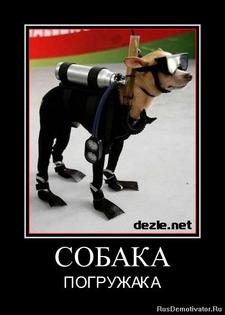 http://rusdemotivator.ru/uploads/09-04-11/1315135820-sobaka.jpg