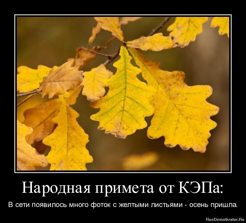 Народная примета от КЭПа: - В сети появилось много фоток с желтыми листьями - осень пришла.