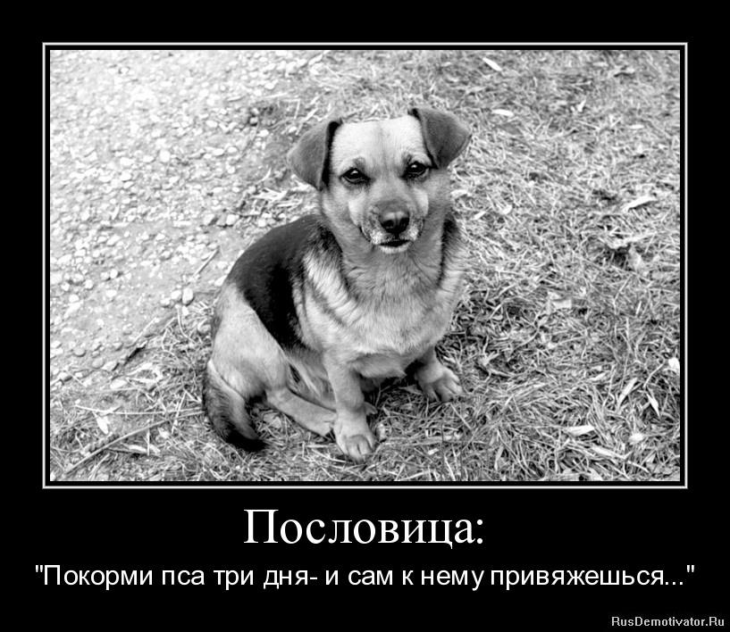 """Пословица: - """"Покорми пса три дня- и сам к нему привяжешься..."""""""