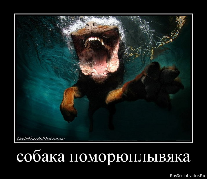собака поморюплывяка