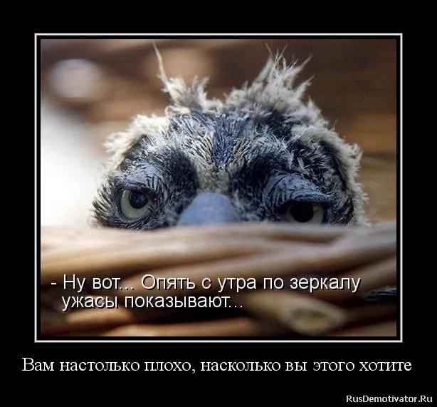 Дошли фото рисунков ящерицы хамилиона все из-за того