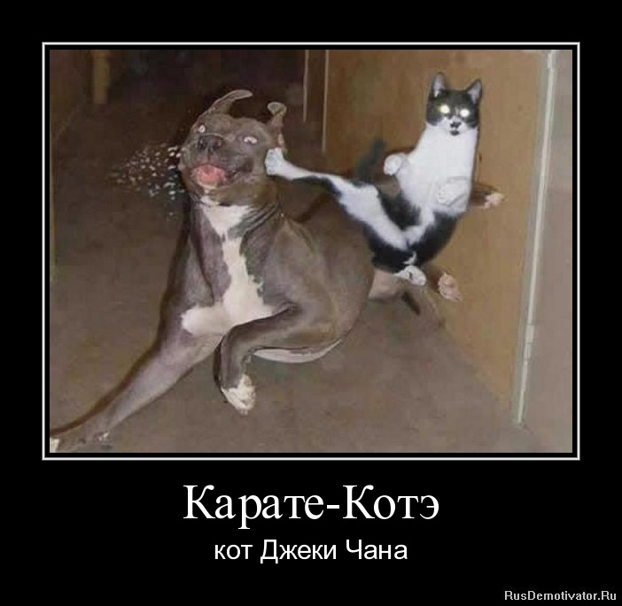 Карате-Котэ - кот Джеки Чана