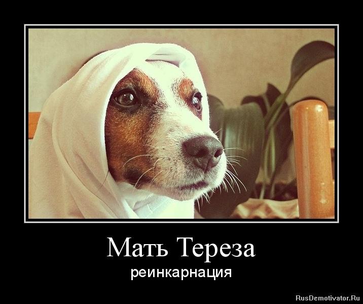 Мать Тереза - реинкарнация