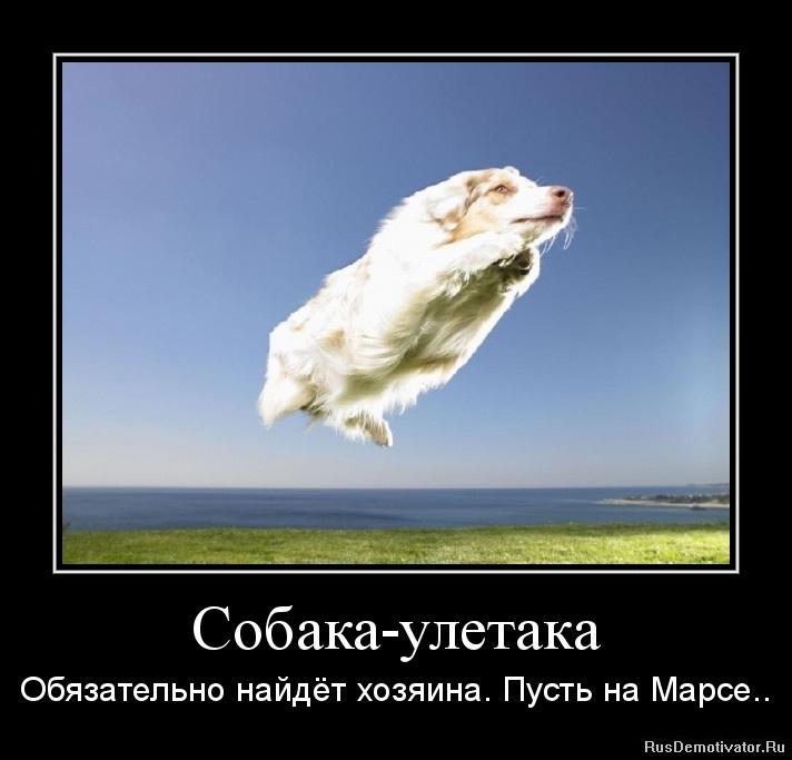 Собака-улетака - Обязательно найдёт хозяина. Пусть на Марсе..