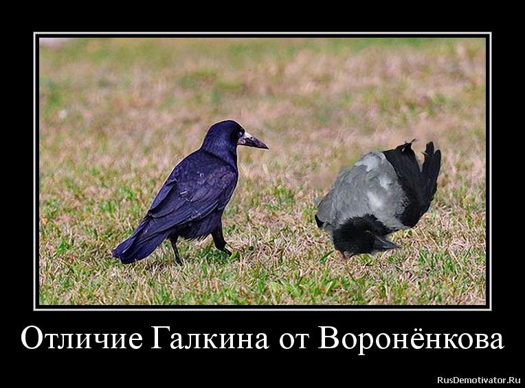 Отличие Галкина от Воронёнкова