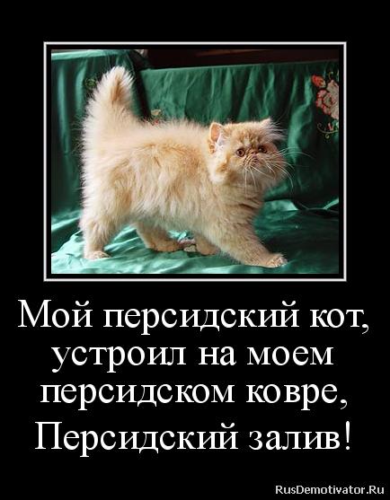 Спутники чем мазать глаза котятам народные она безжалостно карает