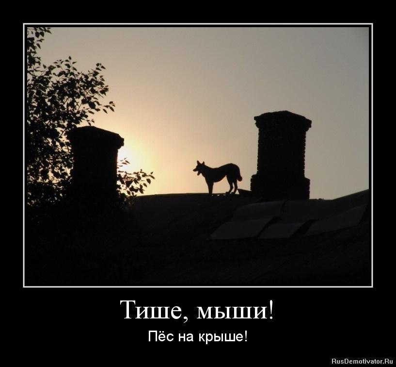 Тише, мыши! - Пёс на крыше!
