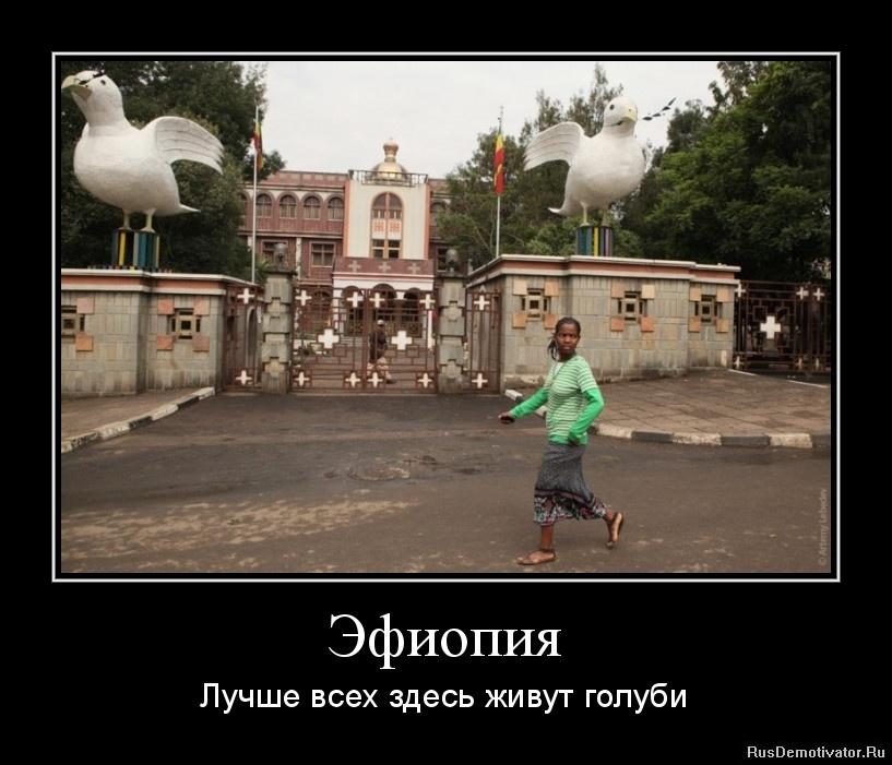 Эфиопия - Лучше всех здесь живут голуби