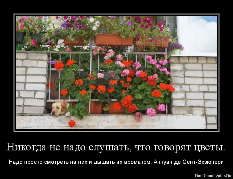 Никогда не надо слушать, что говорят цветы. - Надо просто смотреть на них и дышать их ароматом. Антуан де Сент-Экзюпери
