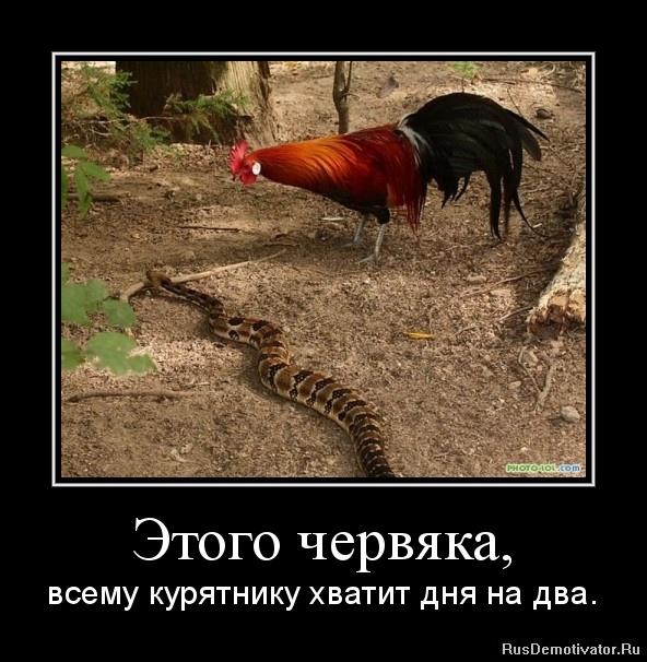 Этого червяка, - всему курятнику хватит дня на два.
