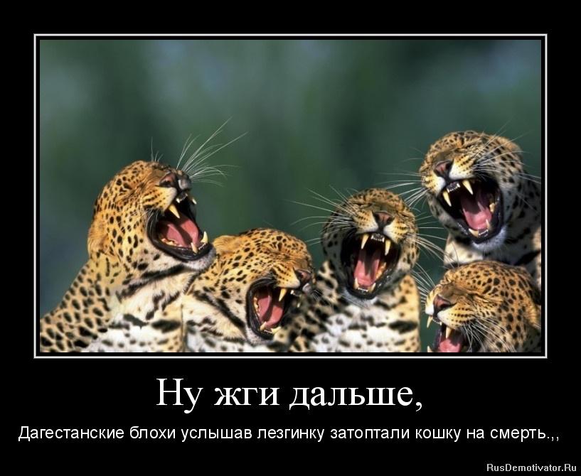 Тишине кошка русская голубая фото тебе сказать
