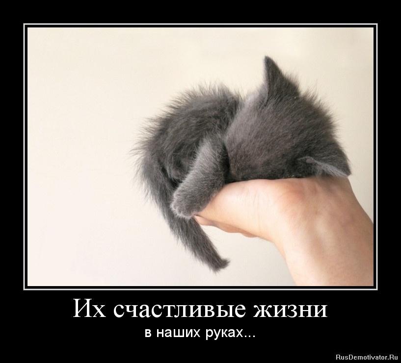 Их счастливые жизни - в наших руках...