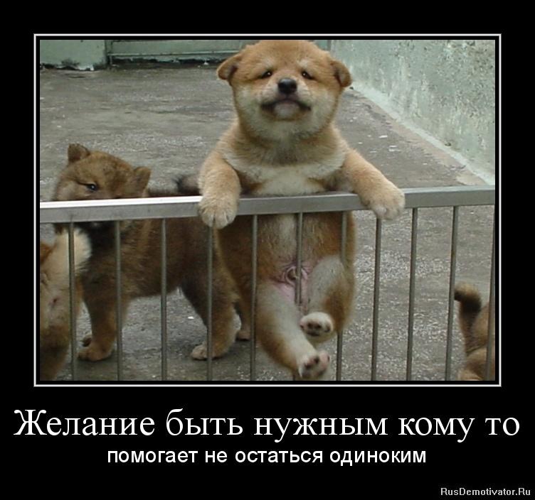 Демотиваторы про животных желание