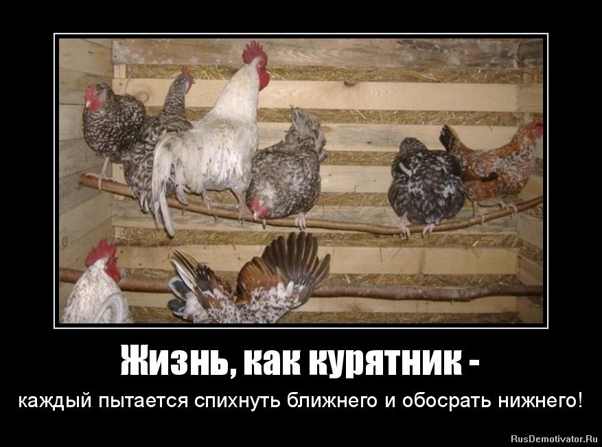 Жизнь, как курятник - - каждый пытается спихнуть ближнего и обосрать нижнего!