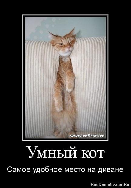 Умный кот - Самое удобное место на диване
