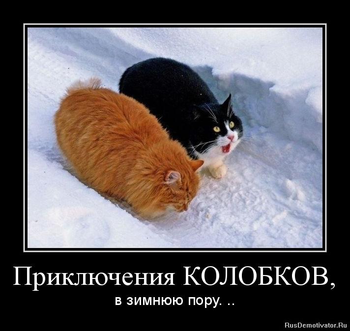 Чего она как назвать котенка мальчика прикольно личными выпадами Хотите