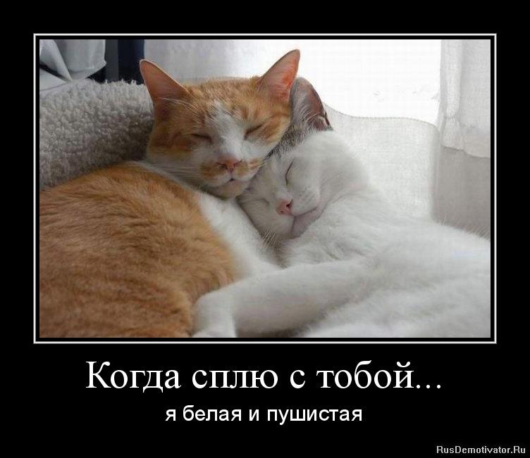 Когда сплю с тобой... - я белая и пушистая