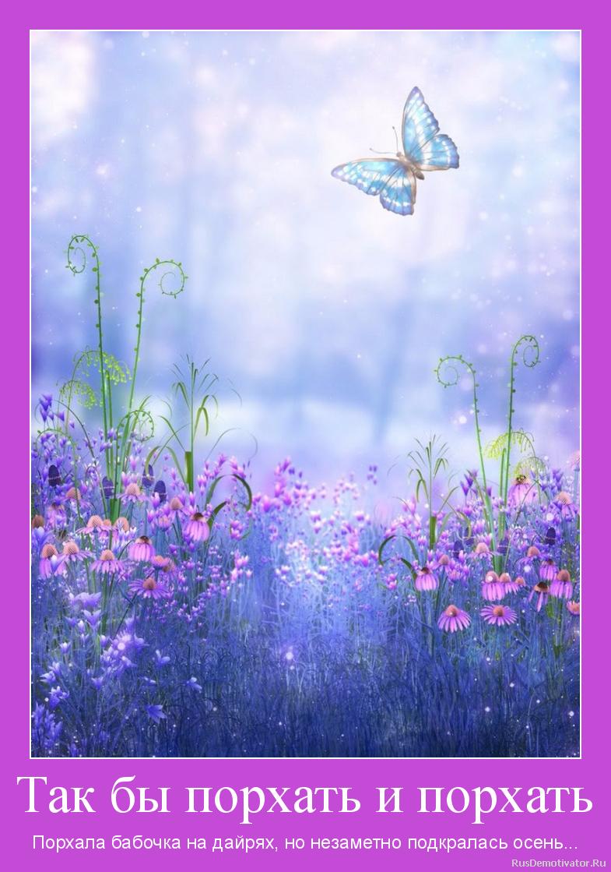 Так бы порхать и порхать - Порхала бабочка на дайрях, но незаметно подкралась осень...