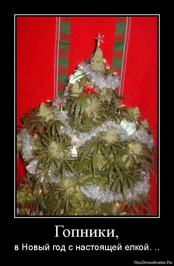 Гопники, - в Новый год с настоящей елкой. ..