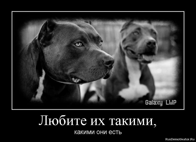 Любите их такими, - какими они есть