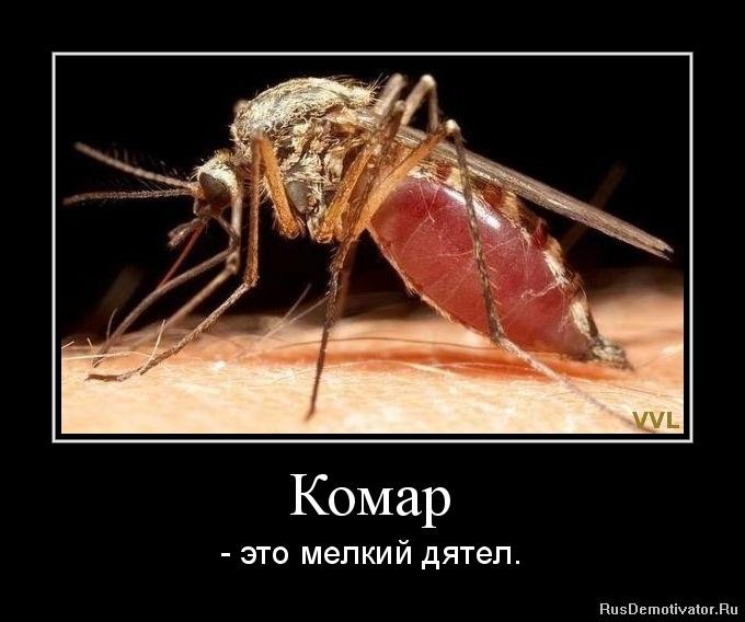 Комар - - это мелкий дятел.