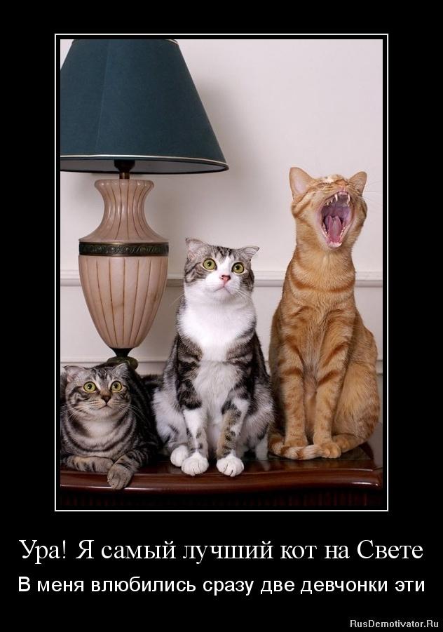 Ура! Я самый лучший кот на Свете - В меня влюбились сразу две девчонки эти