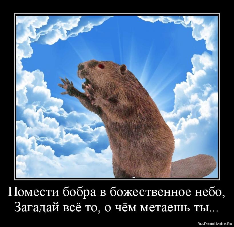Помести бобра в божественное небо, Загадай всё то, о чём метаешь ты...