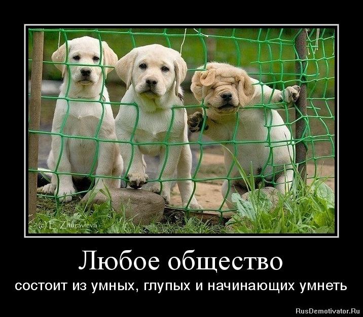 Любое общество - состоит из умных, глупых и начинающих умнеть