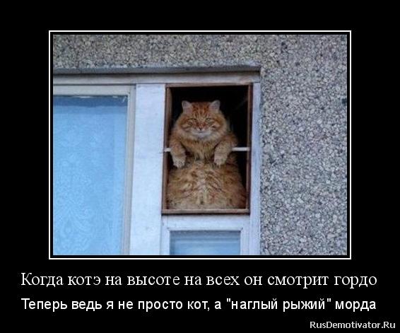 Когда котэ на высоте на всех он смотрит гордо - Теперь ведь я не просто кот, а