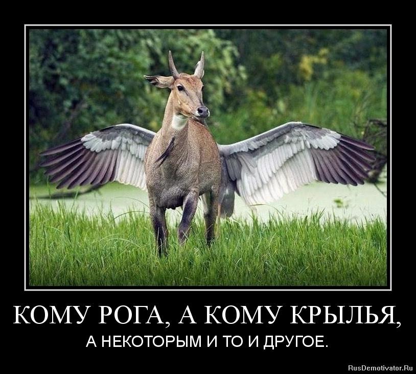 Дальнем смотреть порно лошадь с лошадью нас