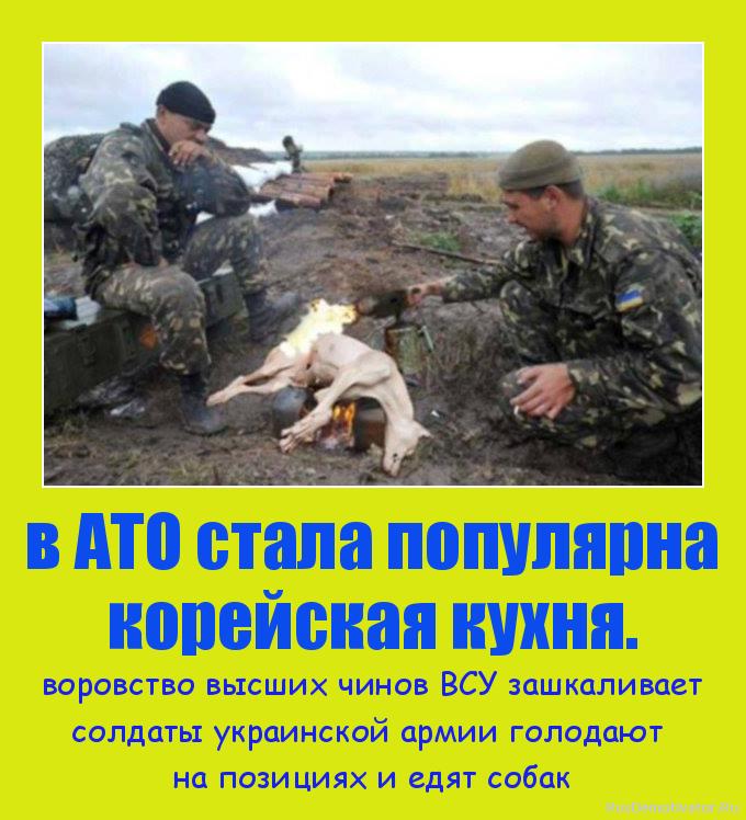 в АТО стала популярна корейская кухня. - воровство высших чинов ВСУ зашкаливает солдаты украинской армии голодают  на позициях и едят собак