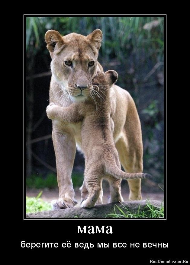 мама - берегите её ведь мы все не вечны