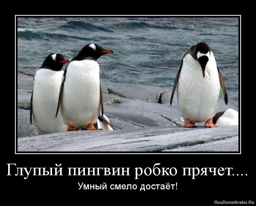 Глупый пингвин робко прячет.... - Умный смело достаёт!