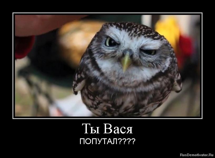 Ты Вася - ПОПУТАЛ????