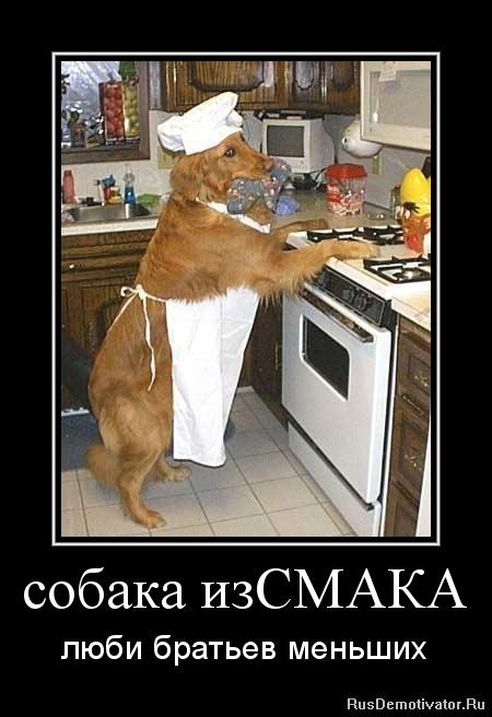 собака изСМАКА - люби братьев меньших