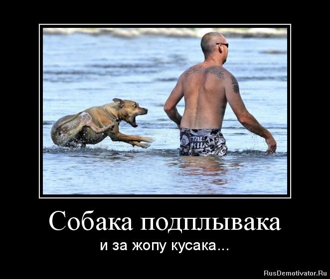 Собака подплывака - и за жопу кусака...